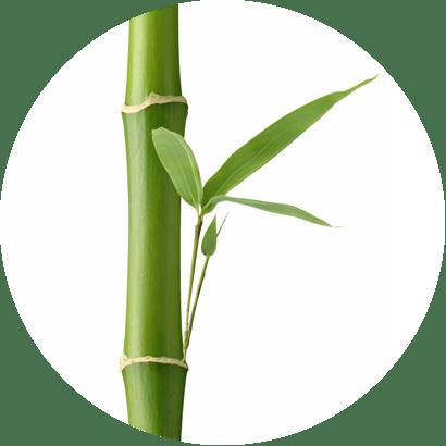 Bambusz kivonat